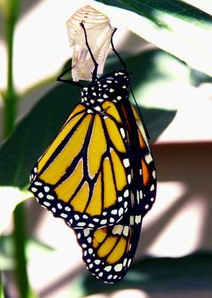 butterfly-1373146_960_720