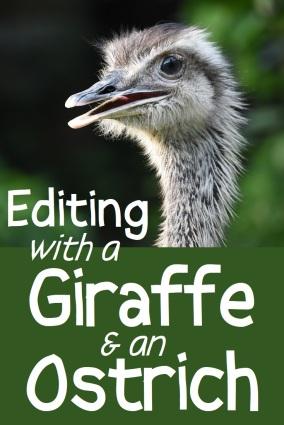giraffe pin1